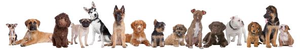 Honden op een rij