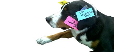 Hond met memo's beplakt