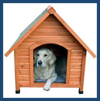 Sociale huishond