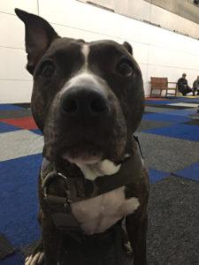 Binnenlocatie hondenschool sammie