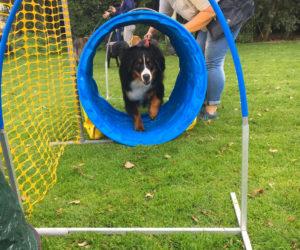 Hooper voor honden
