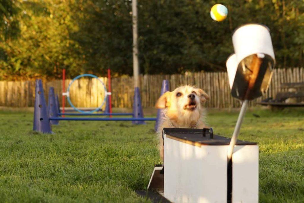 Hond die Flygility doet
