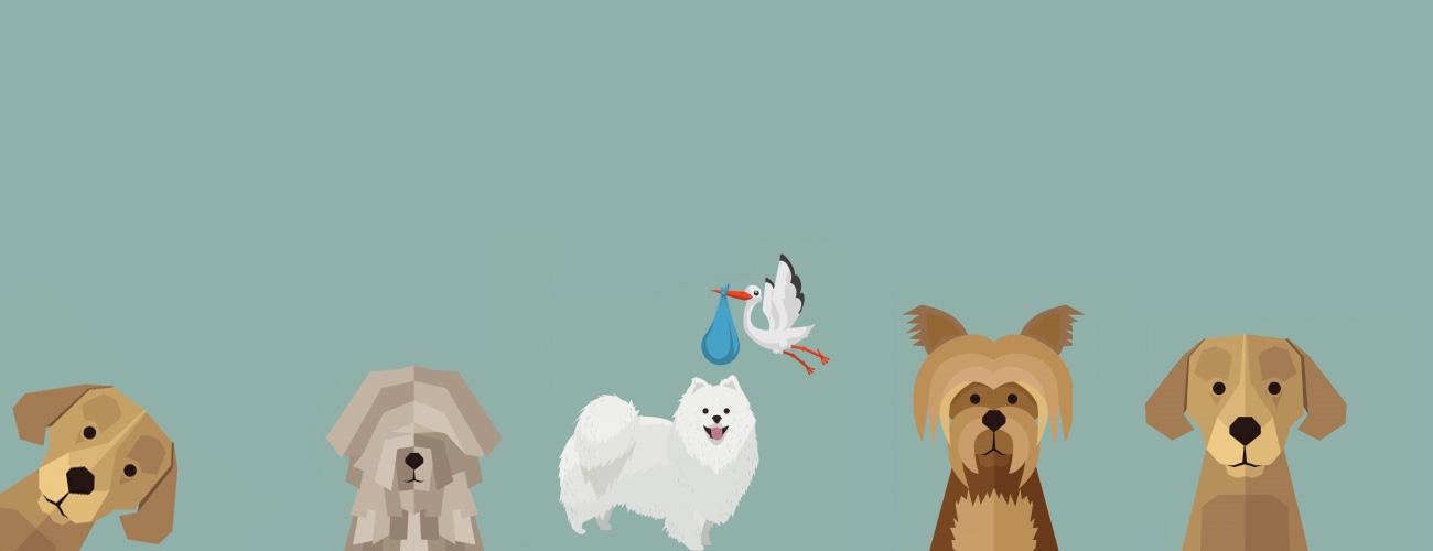 Online honden cursus en honden training