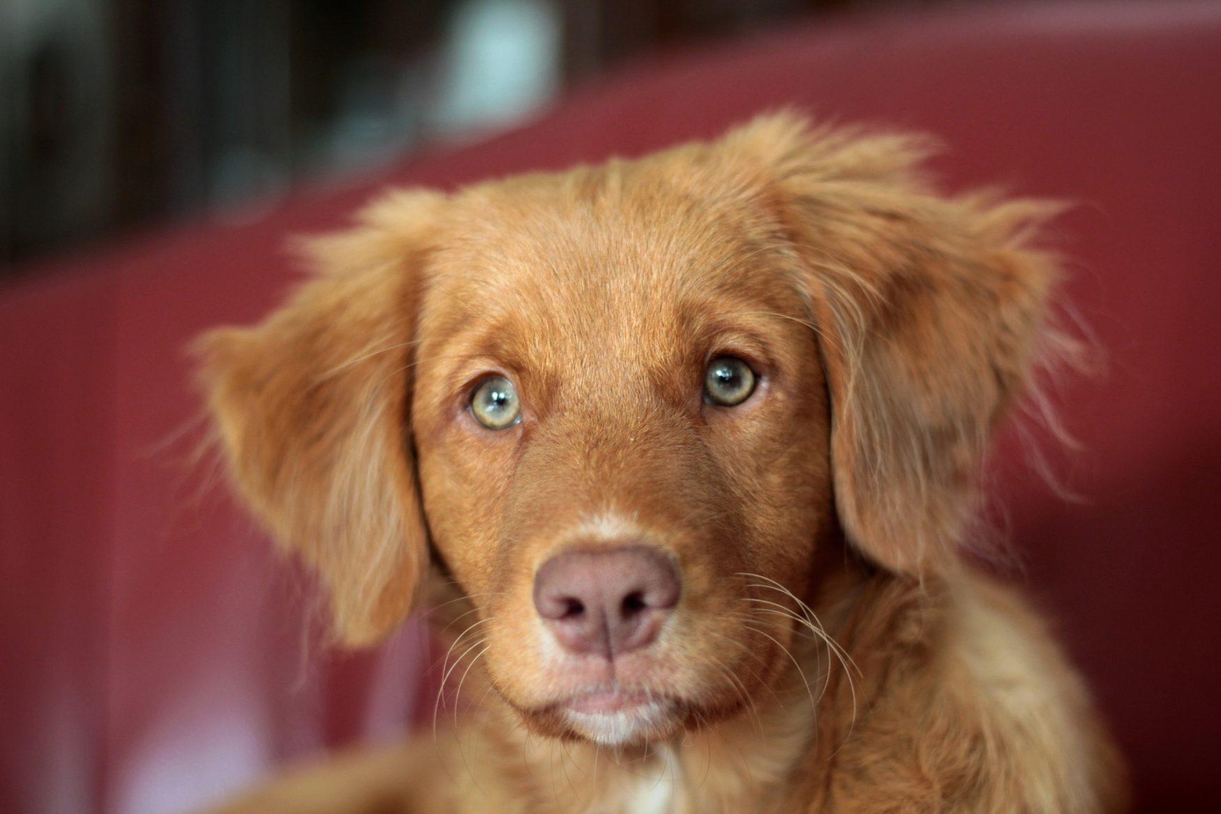 Hondenschool Utrecht hond op bank