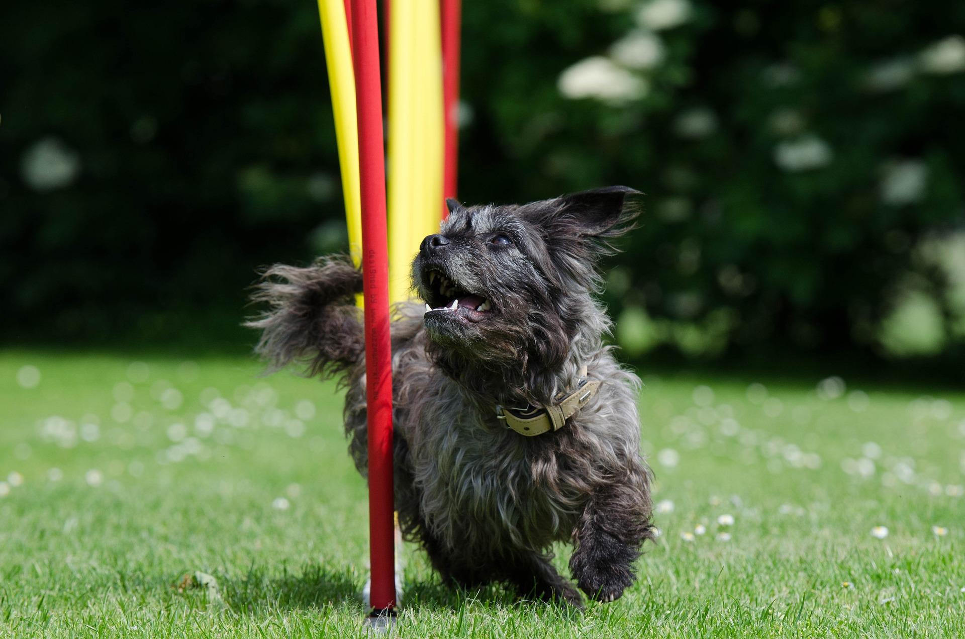 Hondenschool Utrecht honden