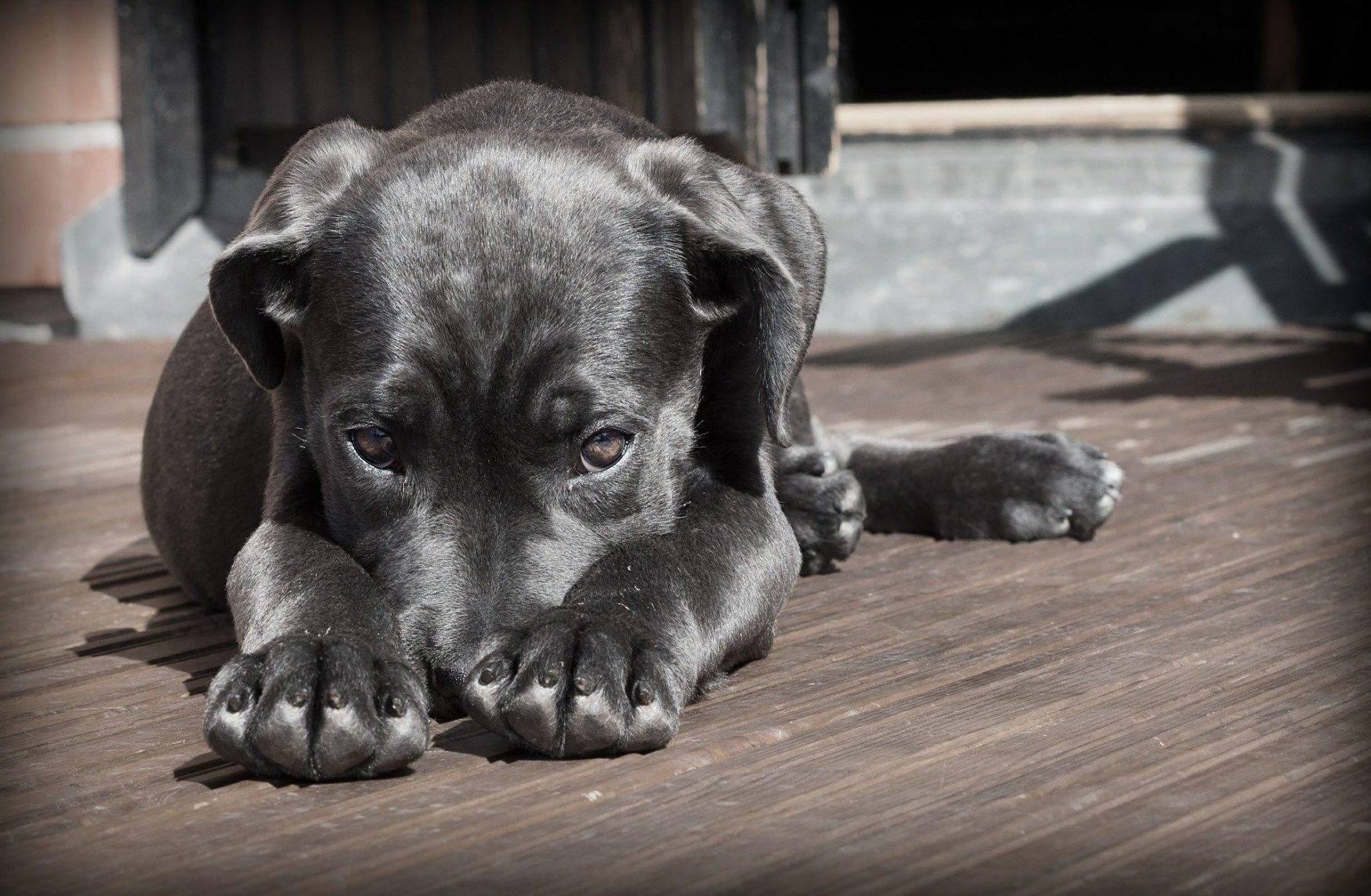 Hondenschool Utrecht inschrijven