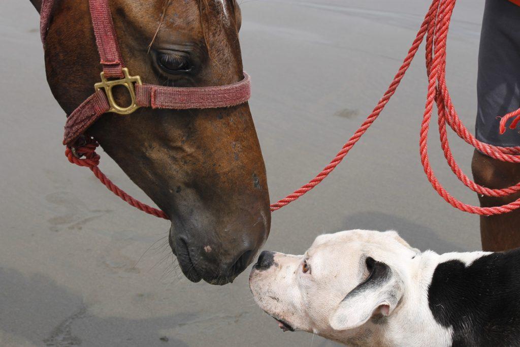 workshop paard en hond hondenschool utrecht